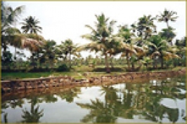 Cochin Backwaters In Kerala