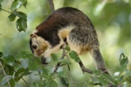 Chinnar Wildlife Sanctuary In Kerala